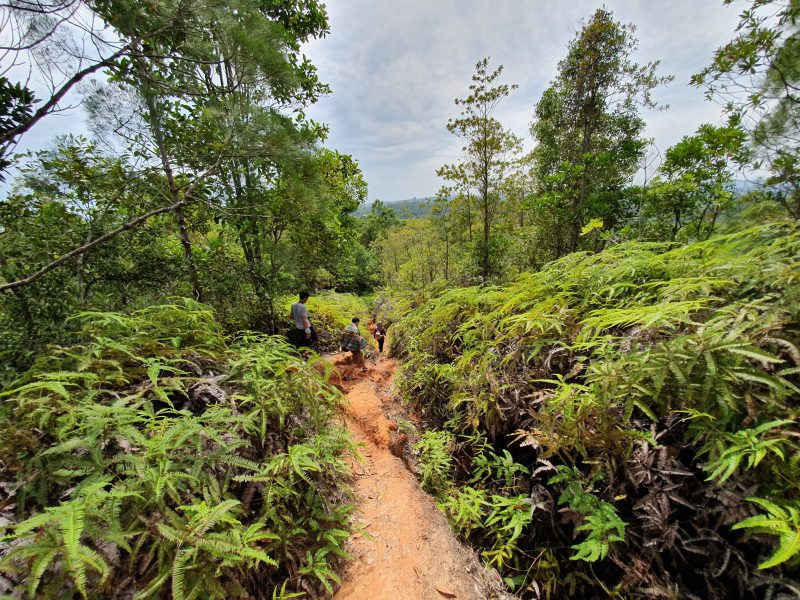 Hiking in Brunei