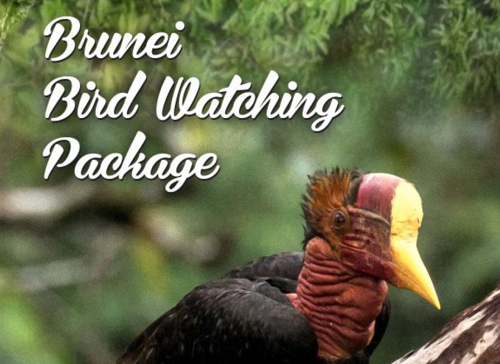 Brunei bird watching packages